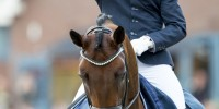 Former champion Fiontini in the lead at 6-year-olds - Longines FEI ...